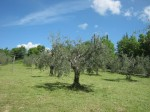 chianti-paesaggio-agricolo