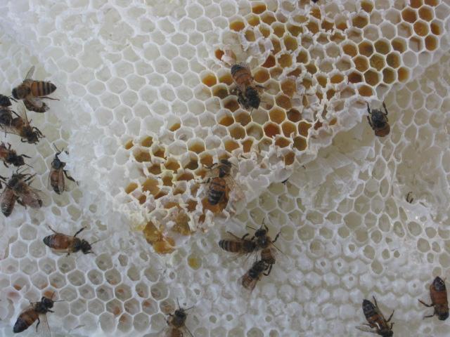 Sciame di api nella finestra 3 andrea pagliantini - La finestra di fronte andrea guerra ...