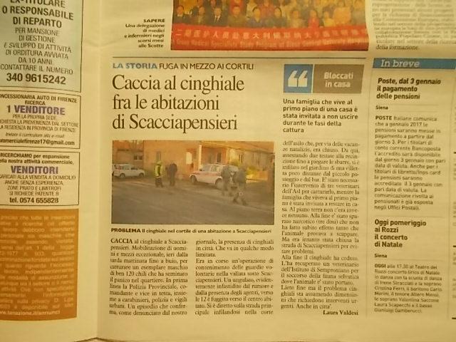 la-nazione-28-dicembre-articolo-di-laura-valdesi-su-cinghiali-scacciapensieri