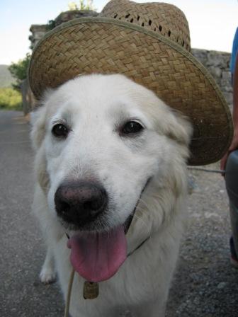 cane-contadino