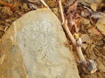 fossile-fra-i-tralci-di-vite-9
