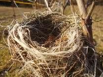 nido-di-filo-5