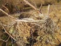 nido-di-filo-7