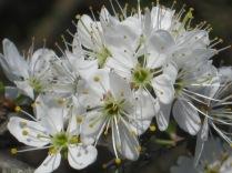 primavera-a-vertine-13