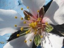 primavera-a-vertine-22