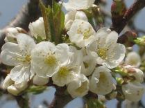 primavera-a-vertine-25