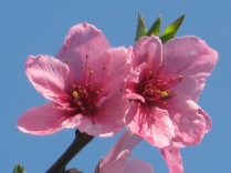 primavera-a-vertine-28