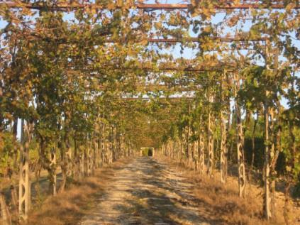 vitarium-san-felice-il-viale-di-foglie-gialle-e-di-foglie-rosse-9