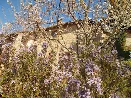 fiore di ramerino e susina