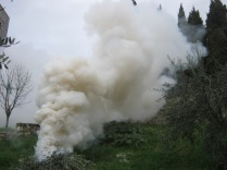 fumo-di-ulivo-3