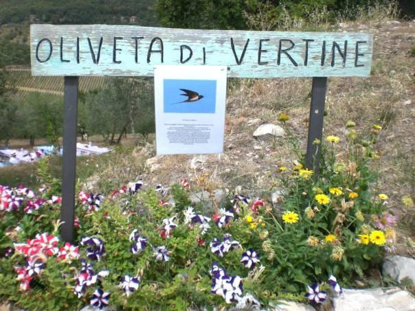 oliveta-vertine