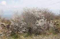 primavera vagliagli (2)