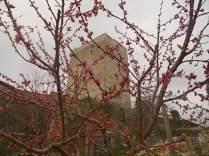 rosa di vertine