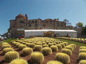 cactus giromagi castiglion del lago (10)