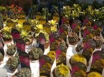 cactus giromagi castiglion del lago (14)