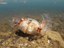 panetteria tassi castiglion del lago meringa gigante (7)