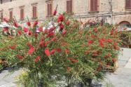 casole in fiore (10)