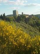 potatura oliveta di vertine (10)