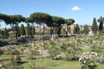 roseto di roma (13)