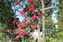roseto di roma (34)