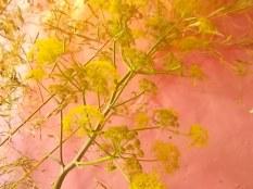 slow flowers podernovi chianti castello di brolio (21)
