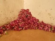slow flowers podernovi chianti castello di brolio (3)