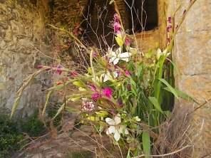 slow flowers podernovi chianti castello di brolio (38)