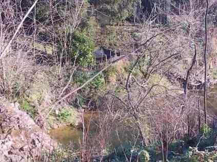 taglio-alberi-torrente-riluogo-10