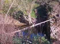 taglio-alberi-torrente-riluogo-12