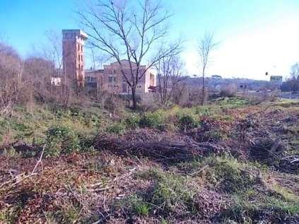 taglio-alberi-torrente-riluogo-14