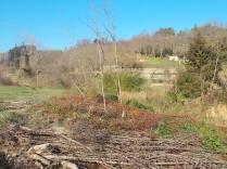 taglio-alberi-torrente-riluogo-16