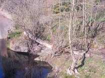 taglio-alberi-torrente-riluogo-5