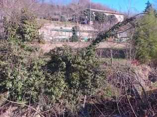 taglio-alberi-torrente-riluogo-8