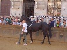 cavalli in piazza del campo (2)