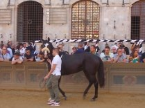 cavalli in piazza del campo (5)