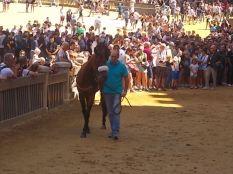cavalli in piazza del campo (7)