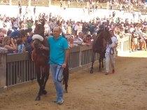 cavalli in piazza del campo (8)
