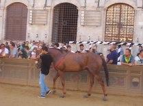 cavalli in piazza del campo