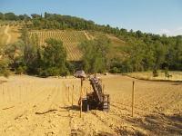 gianluca, palificazione e bagnatura vigna nuova vertine 2017 (10)