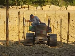 gianluca, palificazione e bagnatura vigna nuova vertine 2017 (24)