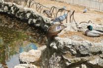 lizza siena degrado lago dei cigni (4)