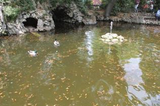 lizza siena degrado lago dei cigni (5)