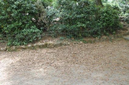 lizza siena degrado lago dei cigni (8)