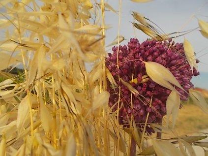 pacina, uva porri e avena (10)