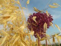 pacina, uva porri e avena (11)