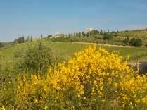 vertine ginestre oliveta cappella (6)