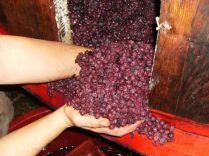 fermentazione-nel-legno-e-svinatura