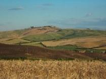 grano-e-armonia-della-berardenga-14