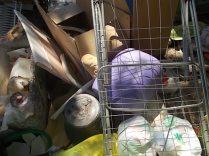guistrigona rifiuti sulla strada (5)