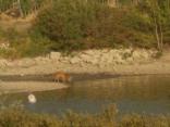 abbeverata del daino al lago della villa a radda (3)